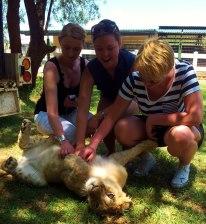 lion, animals, bush, game reserve, johannesburg, africa