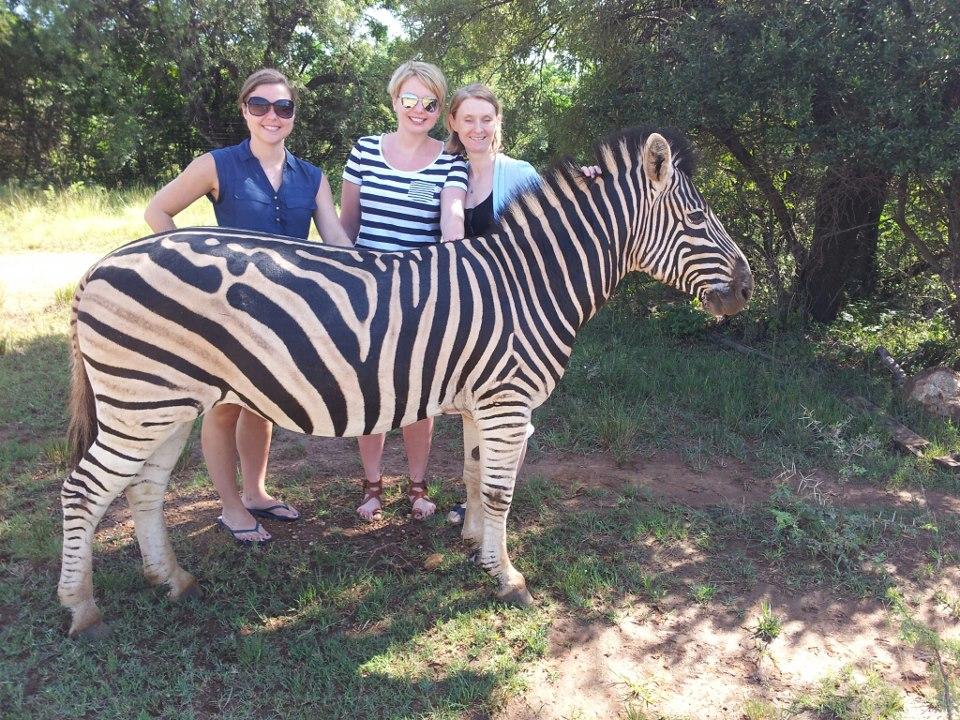 zebra, glen afric, game reserve, johannesburg, south africa