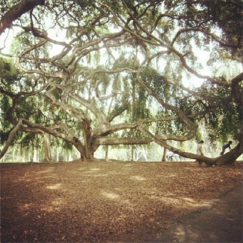 sri lanka, travel, botanical garden