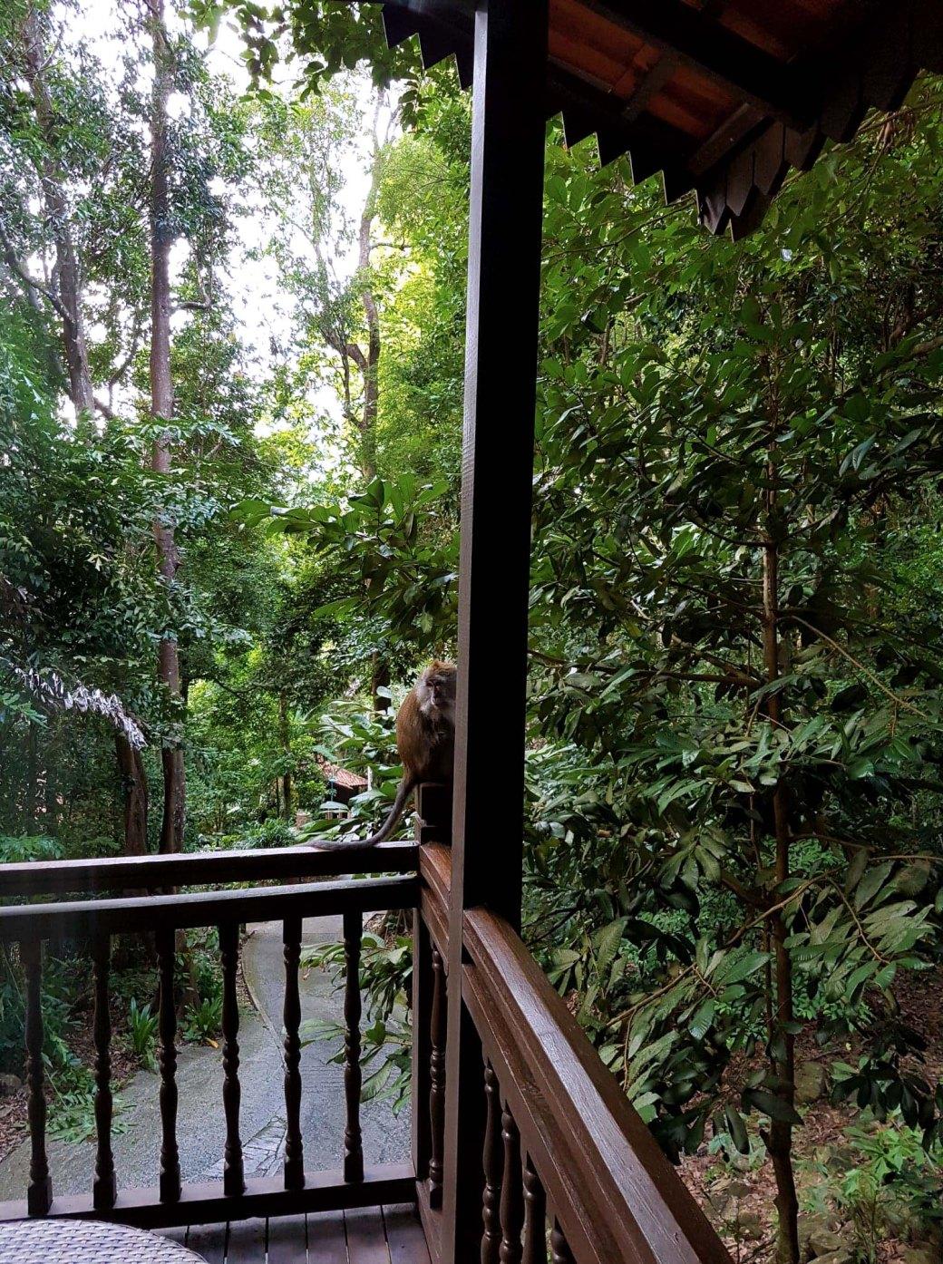 Monkeys on the balcony, Langkawi, Malaysia