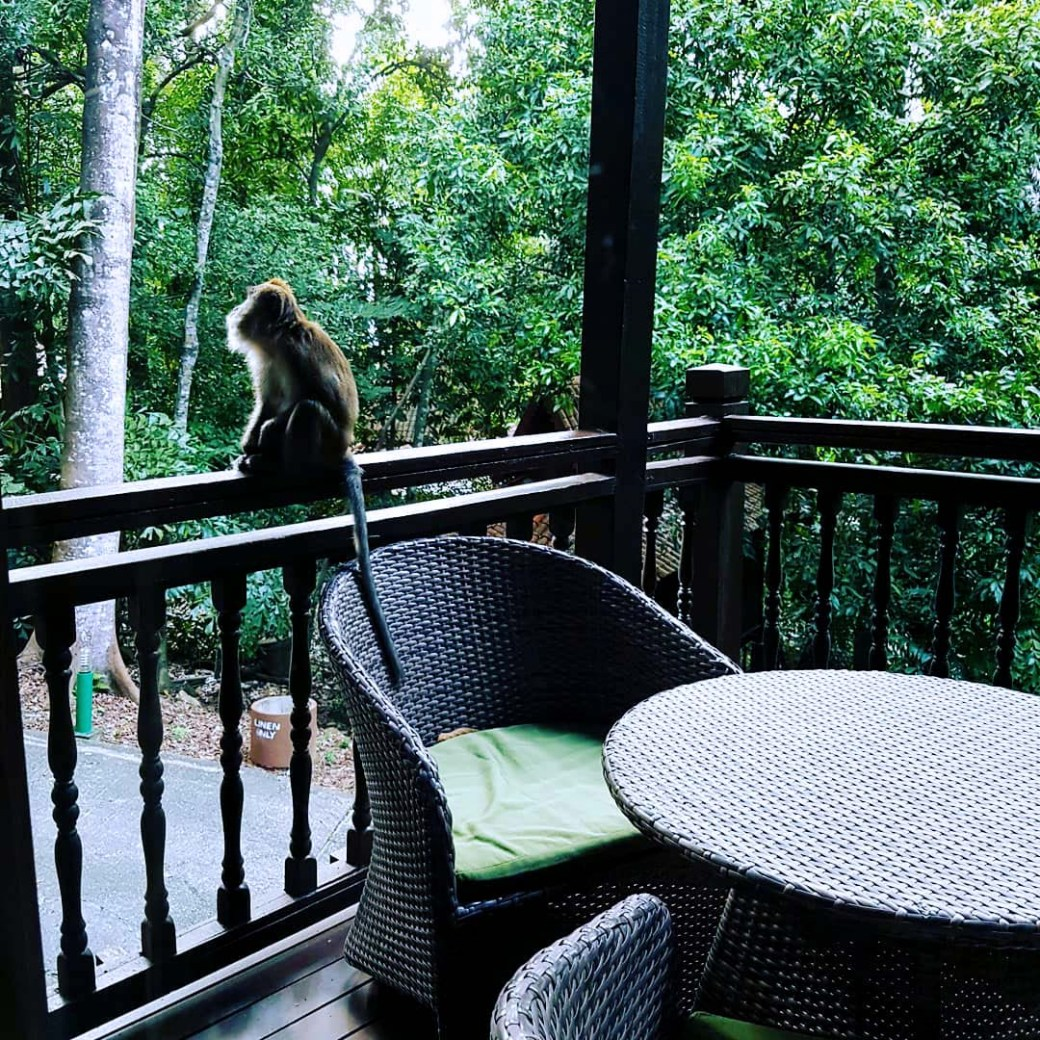 Monkeys in the Rainforest, Langkawi, Malaysia
